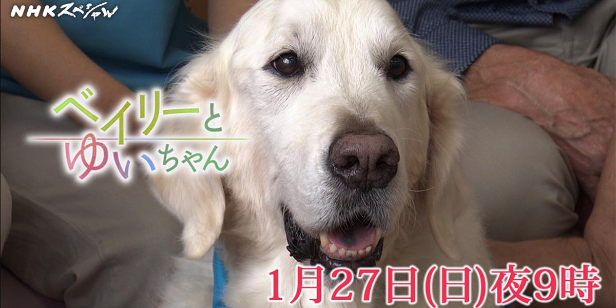 NHKスペシャルベイリーとゆいちゃん